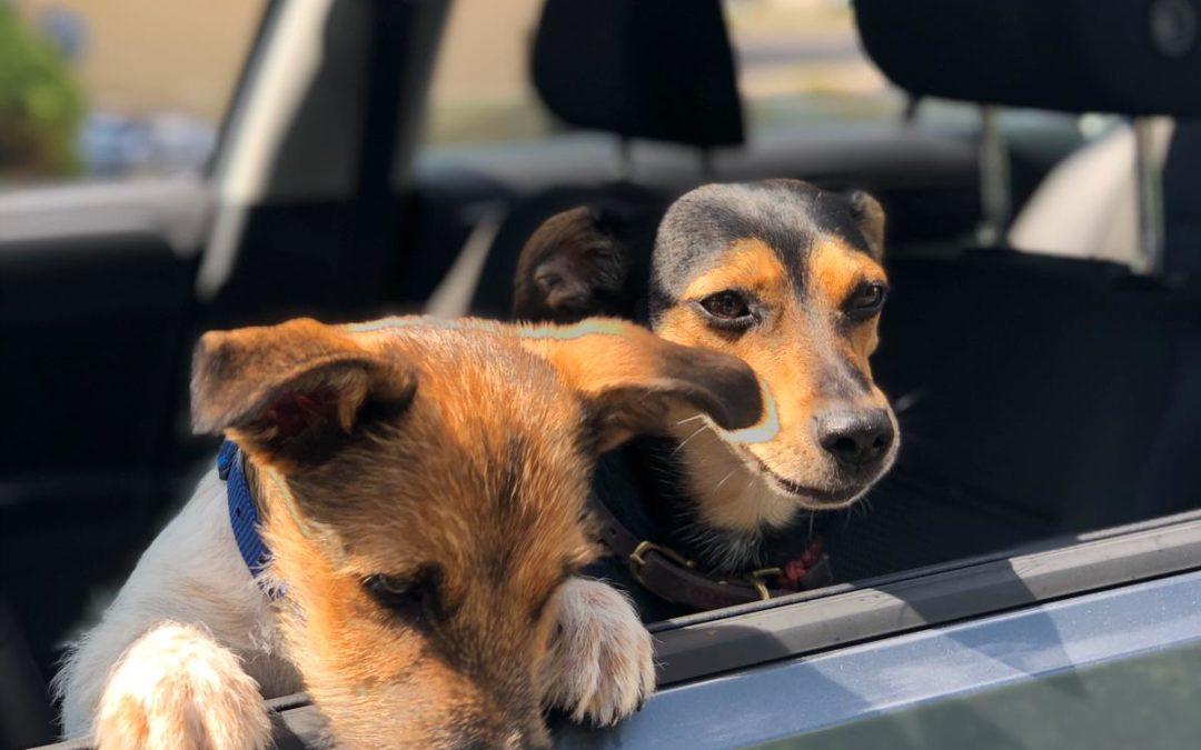 Warum wir ein Fan von Bürohunden sind